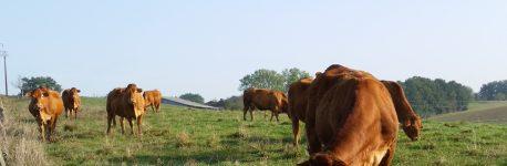Barrotes – la première ferme du Gers